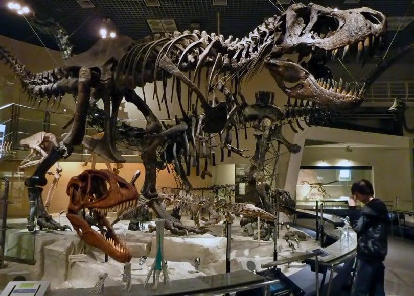 المتحف الوطني للعلوم الطبيعية